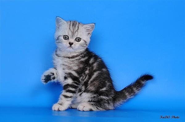 Кошка анжела фото